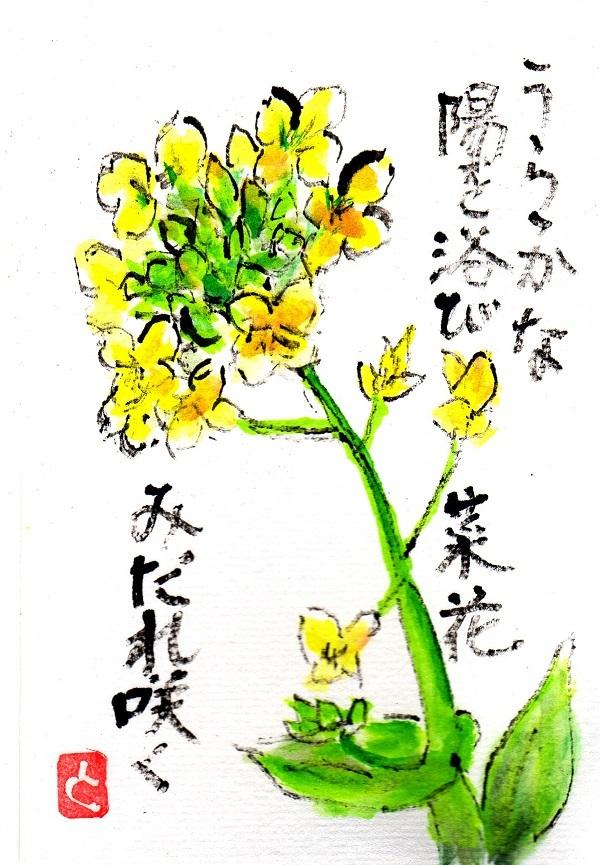 nanohana170329.jpg