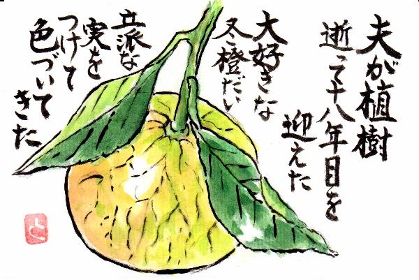 fuyudaidai1209.jpg