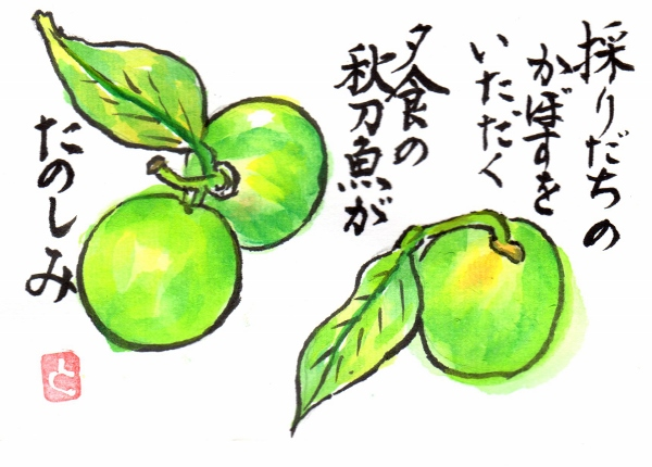 kabosu161002.jpg
